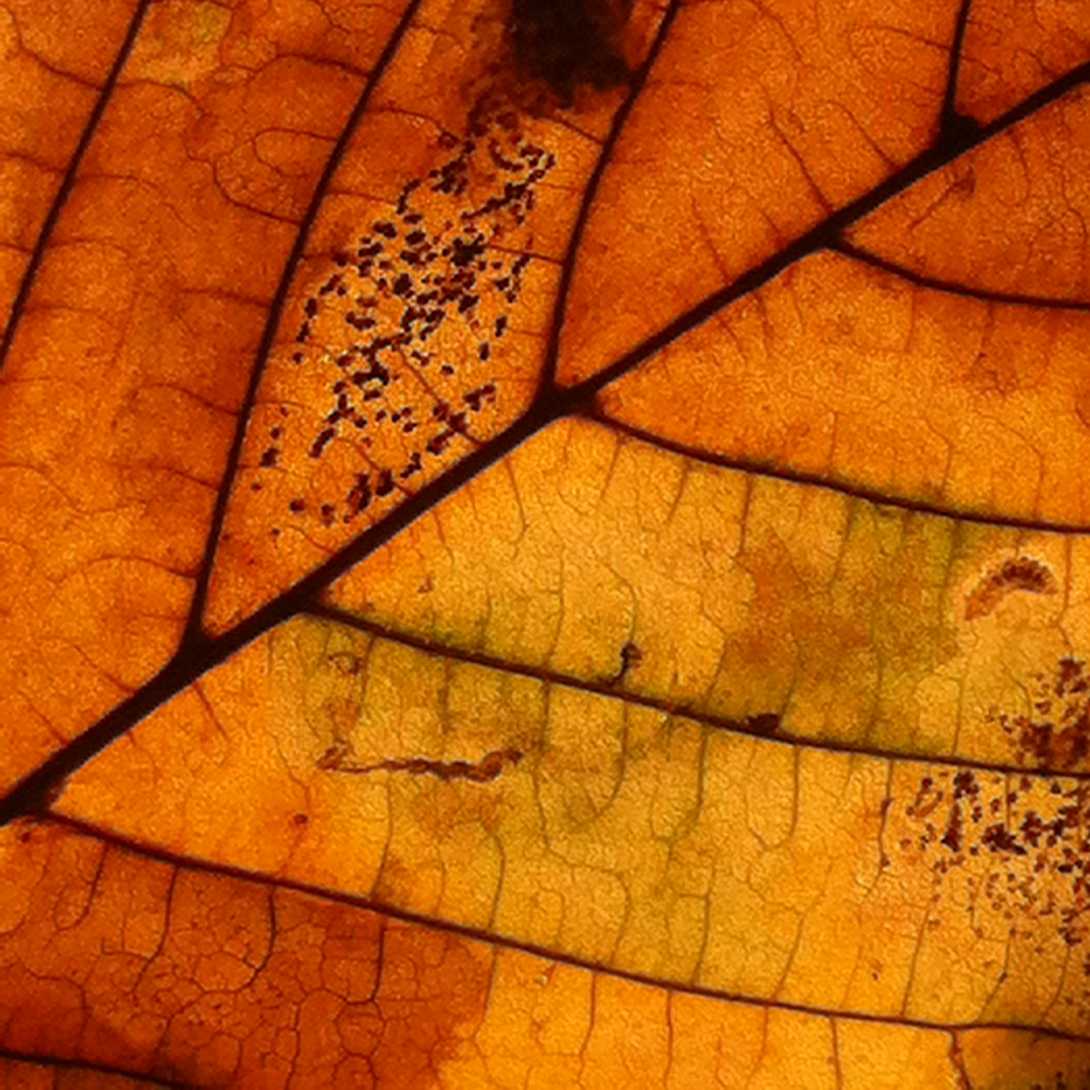blatt, herbst, struktur, orange